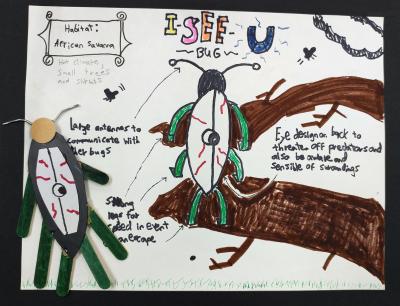 Figure 2_I-See-U Bug